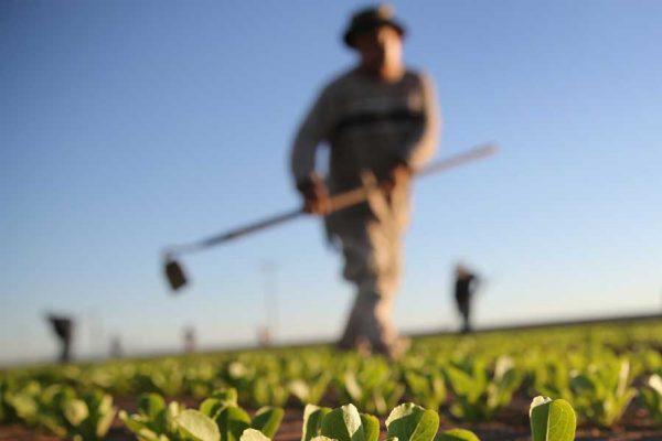 Contratto provinciale agricoli: chiesto il 5% di aumento salariale